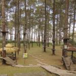 Hutan Pinus ala dunia dongeng di Grafika Cikole