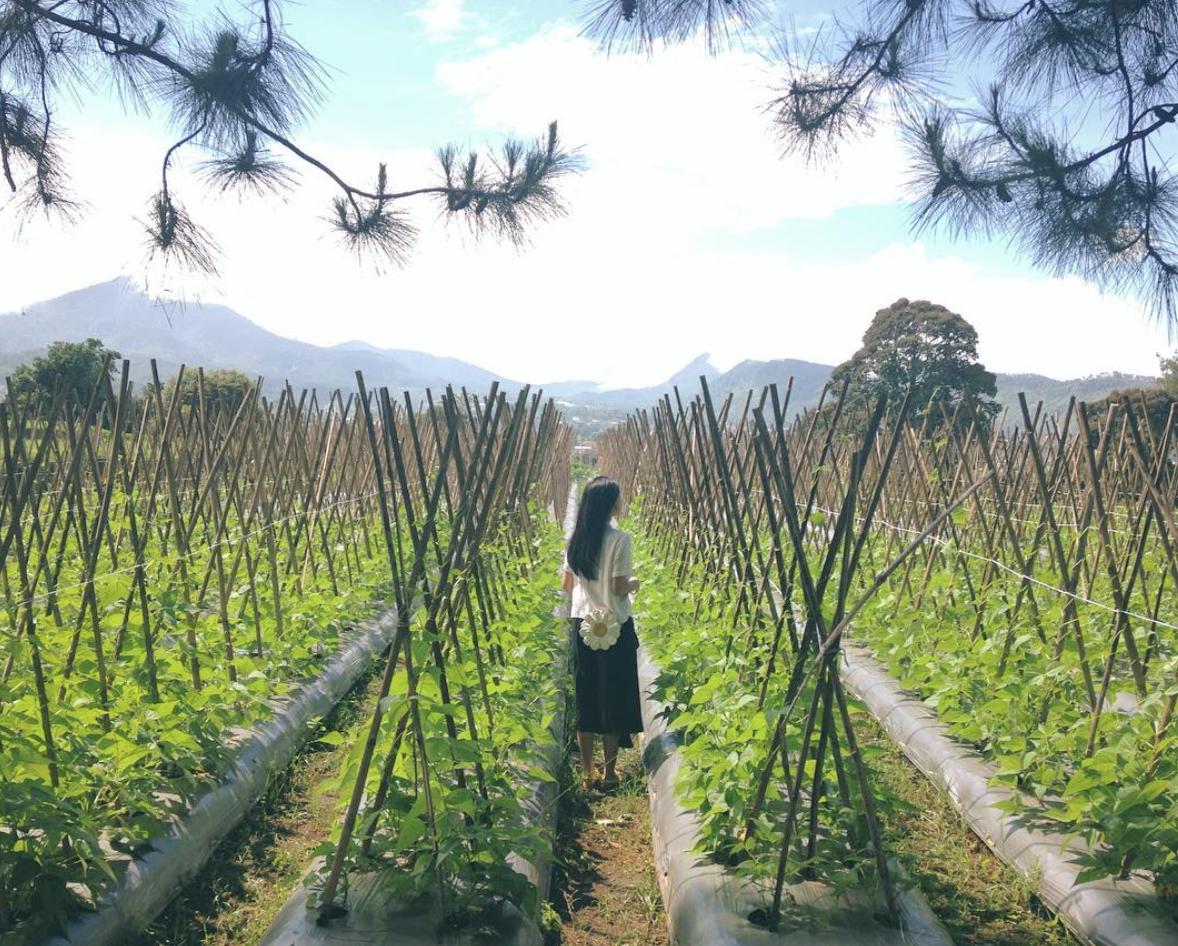 Taman Balitsa Lembang