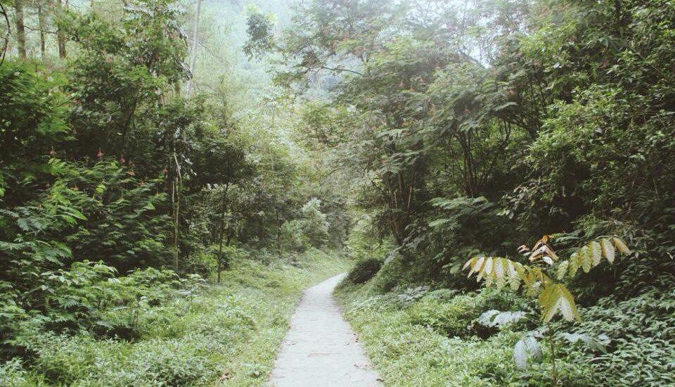 jalan di tahura