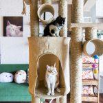 Melepas Stress di Cat Cabin