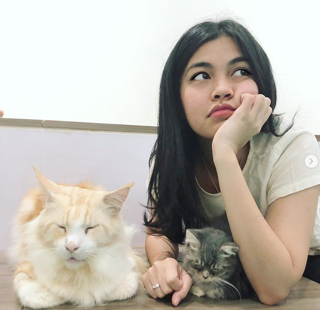 cat cafe PVJ